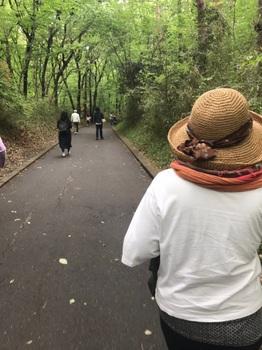 ポピー畑への道.jpg